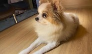 TWICE子瑜爱犬离世,发文公开:我们的宝贝酷吉,你真的走了